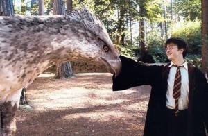 Zvířata v Harry Potterovi - Klofan
