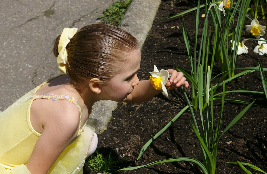 cichani ke kvetine vune