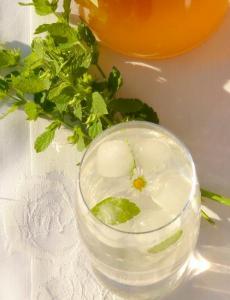 Meduňkový nápoj
