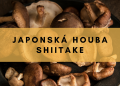 Japonská houba shiitake