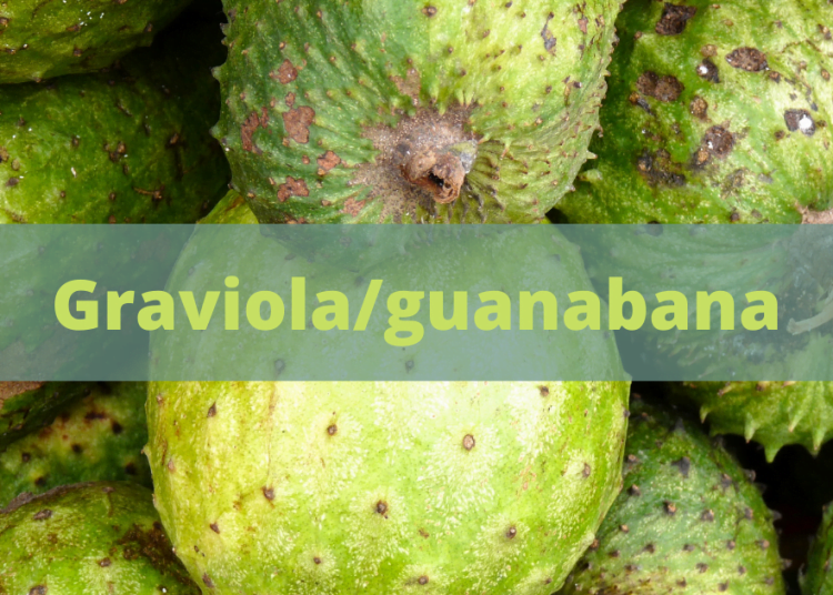 Graviola guanabana