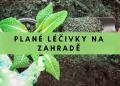 Plané léčivky na zahradě