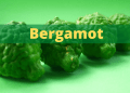 bergamot 1