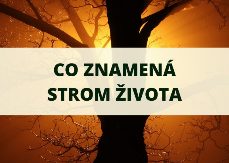 Co znamena strom zivota