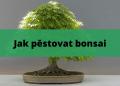 Jak pestovat bonsai 2
