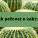 Jak se starat o kaktus